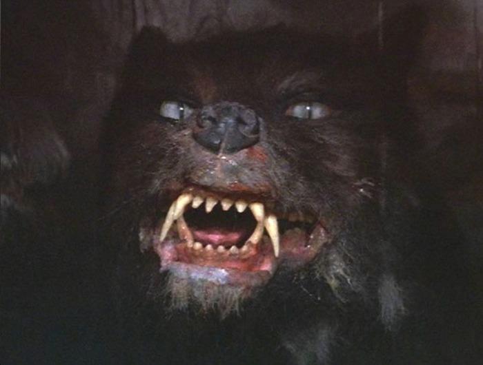 Gmork, il minaccioso lupo che sfodera le zanne fameliche al giovane cacciatore pietrificato dalla paura….