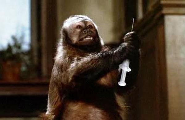 La piccola mangia-banane psicopatica in Monkey Shines (1988)