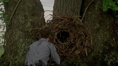 I rami secchi nel bosco disposti nell'albero come a formare un varco