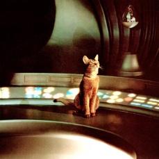 Il gatto venuto dallo spazio (1978)