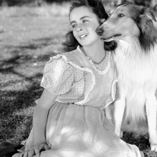 Torna a casa, Lassie! (1943)
