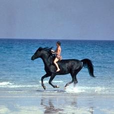 Black Stallion (1979)