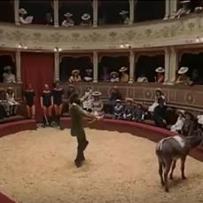 Al Teatro Sociale di Amelia (Terni) fu allestito il circo in cui Pinocchio, tramutato in somaro, è maltrattato dal direttore e finisce con il rompersi una zampa.